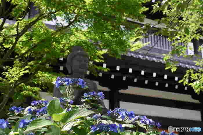 初夏の長谷寺は、ツツジ、藤(ふじ)・牡丹(ぼたん)が楽しめます。また、眺望散策路には40種類以上約2500株のあじさいが群生し、鎌倉有数のあじさいの名所となっています。
