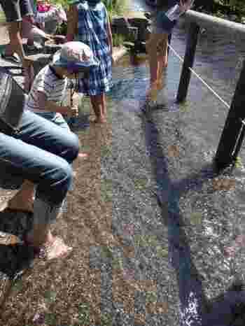 敷地内になる親水広場では、わさび田に流れる清流に足を入れることもできます。季節を問わずに冷たい湧き水を実感できます。