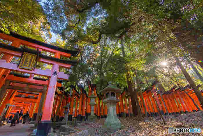 奈良時代よりおよそ1300年続く「お稲荷さん信仰」のはじまりが、ここ伏見稲荷神社。全国各地に祀られている稲荷神社の総本宮にあたります。立ち並ぶ朱塗りの鳥居は長きにわたって奉納されたもので「千本鳥居」と呼ばれていますが、実際には約1万基にものぼるそうです。青もみじの季節には、鮮やかな朱色と新緑のコントラストが心を打ちます。