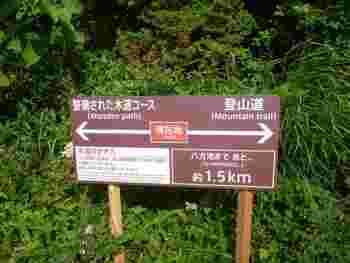 ここまでの流れをおさらいしましょう♪乗り場までテクテク歩いて、ゴンドラ「アダム」→リフト「アルペンクワッド」→リフト「グラートクワッド」と乗り継ぎ、登山道口に到着!ここからは、整備された木道コースと登山道と二手に分かれます。初心者さんは、木道コースがおすすめ!
