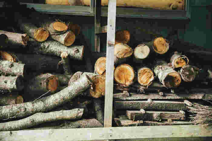 剪定されたさくらの木