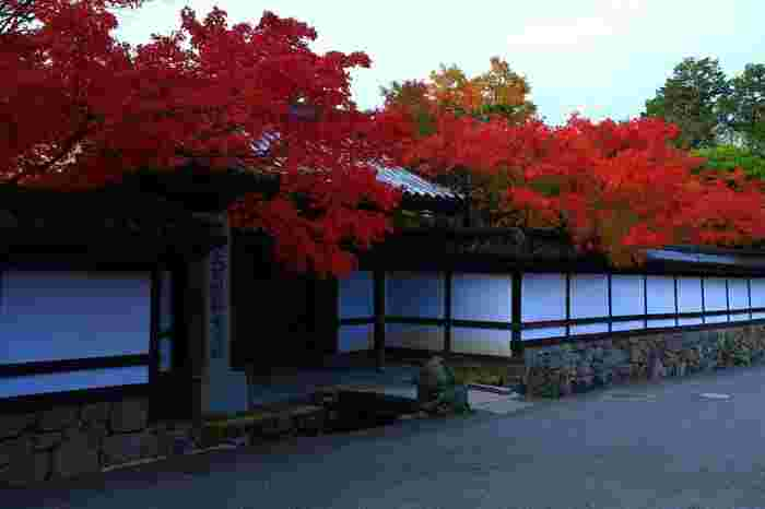 """「天授庵」は、金地院の南陽院と真浄院を挟んで西側、次項で説明する南禅寺三門の南側に位置しています。""""紅葉の名所""""として京都では名高く、特にカエデが美しいスポットして有名です。【11月中旬の「天授庵」正門。】"""