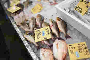 夏の到来と共に脂がのって美味しくなる「イサキ」。皮にも旨味があるので塩焼きやポワレ、ブイヤベース…和食やイタリアンなど調理法を選ばず美味しく頂くことができる魚です。そこで今回は、「イサキ」を存分に味わうことができるレシピをご紹介したいと思います。