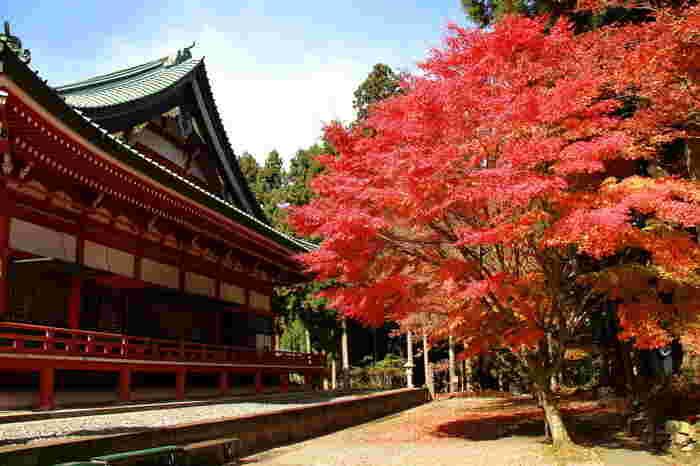 延暦寺は、8世紀末に最澄が開基した天台宗の寺院で、滋賀県大津市に位置する標高848メートルの比叡山を境内としており、世界遺産にも登録されています。
