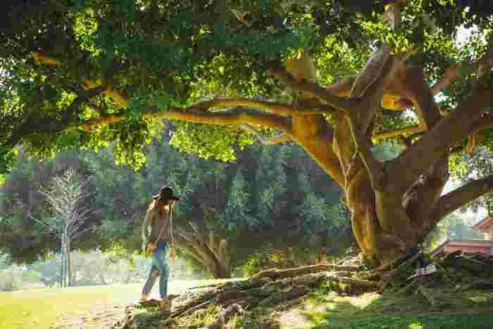 この地球で長い年月をかけて育まれてきた大地や森、海などの大自然。そんな地球の恵みに生かされている私たちは、地球に優しいエコな暮らしを心がけたいものですよね。
