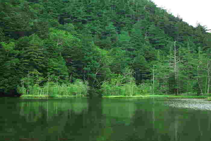 木々を映しこんだ吸い込まれそうなほど深い緑色の神秘的な明神池。河童橋から見えるダイナミックな景色とはまた違う、深みのある自然を満喫できる場所です。ゆっくりと楽しんだら、ここから引き返して河童橋まで。同じ道でも帰りは違った魅力を見つけられるかもしれませんね。
