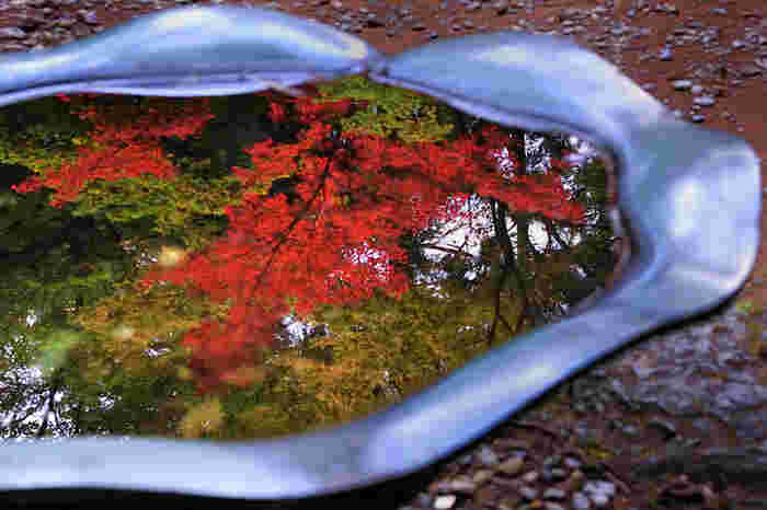 小さな水盆が、鏡のように紅葉した樹々を映し出す様は、まるで秋そのものが水盆に舞い降りたかのようです。