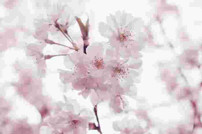 恋に揺れる2人の少女の物語「花とアリス」。岩井俊二監督作品。 幼なじみで親友の花とアリス。憧れの先輩をめぐる三角関係が、美しい風景と共に甘酸っぱく描かれています。