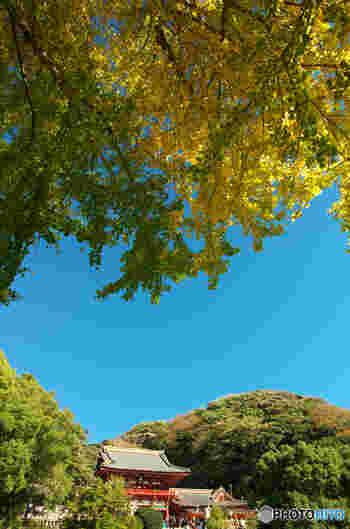 鎌倉駅東口から鶴岡八幡宮方面には小町通りや段葛があり、周辺には、竹林でお馴染みの報国寺、鎌倉ハイキングコースがあります。その他にも鶴岡八幡宮より右手にぐんぐん歩いていくと、紅葉が綺麗な鎌倉宮があるなど見所いっぱい。