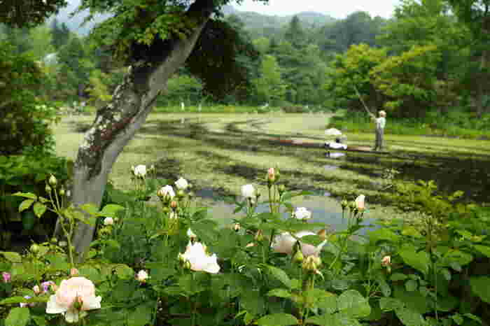 豊かな自然に恵まれた軽井沢。クラシカルなインテリアやおいしい朝食など魅力的なホテルを選んで、上質なホテルステイでも癒されてくださいね。