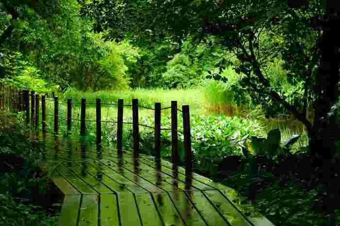 緑豊かで人工物が少ない高原は、酸素も濃く、夏でも涼やかで爽やか。 特に春から秋にかけては、訪れるのに絶好のシーズンです。【7月上旬の梅雨時の「箱根湿生花園」】