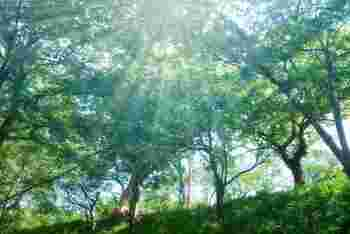 何をするにも良いとされる「天赦日」と、金運アップに良い「寅の日」が合わさる日。そんな縁起の良い日が近々やってくるんです。