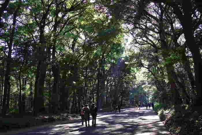 渋谷や原宿の喧騒を離れ、明治神宮や代々木公園に一歩足を踏み入れると、そこは都会とは思えないほどの緑豊かな自然に囲まれています。時間をかけて遠くの森へ森林浴に出かけるより、近場で気軽に癒されてみませんか♪