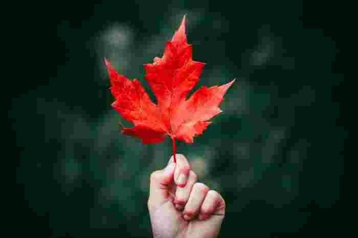 秋があっという間に深まり、朝晩はお部屋の中でも「寒いなぁ」と感じる日が増えてきましたね。そんな時期がくると恋しくなるのが、モコモコのパジャマ、スリッパやブランケットなどのぬくぬく出来るアイテム♡