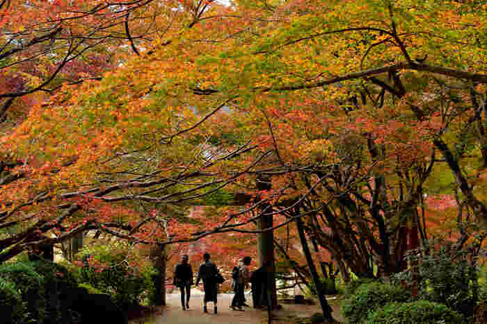 紅葉が一番多いのが参道の階段です。色とりどりの紅葉が重なり合った、紅葉のトンネルはこの時期だけのお楽しみ。11月中旬から下旬が見頃です。