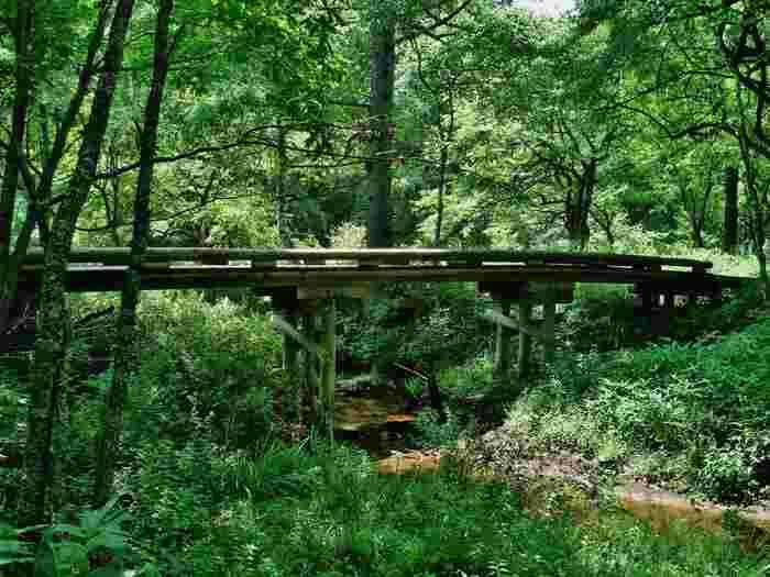 小川のせせらぎが聞こえるほど静かな湿原。木々が生い茂っているので気温が低く感じられます。スニーカーを履いて散策するのがおすすめです。