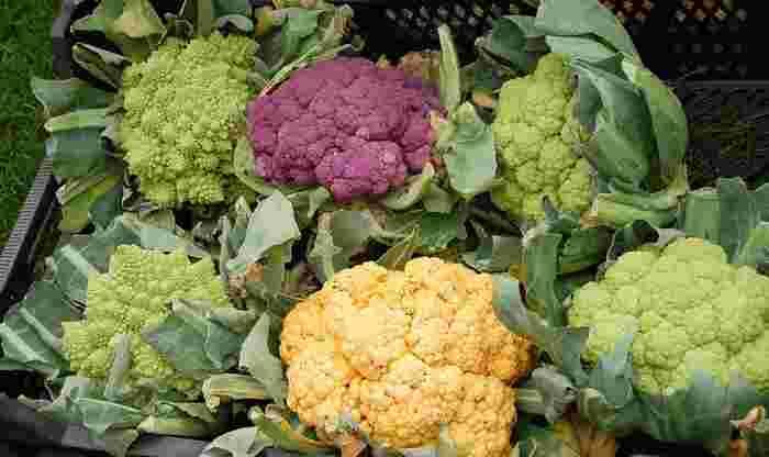 カリフラワーは食物繊維、ビタミンC、カリウムが豊富で、疲労回復、風邪予防、高血圧予防、老化防止などに効果があると言われています。中でも一般的な白色種に比べて、緑のものには風邪予防に効果的な「ビタミンC」が倍近く含まれ、オレンジは免疫力を高める「βカロテン」が多く、紫には抗酸化作用「アントシアニン」が含まれているそう。もし見かけたら、色つきカリフラワーも使ってみてくださいね。