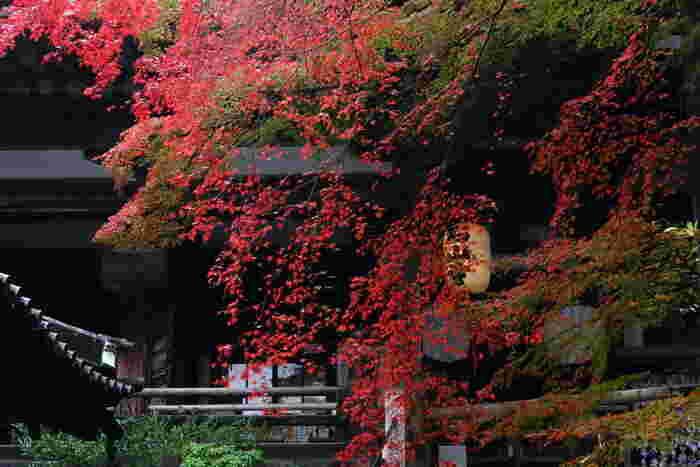 大津市にある真言宗の寺院、石山寺は、紫式部が「源氏物語」の着想を行った源氏物語ゆかりの寺院として有名です。花の寺として有名な石山寺ですが、秋の紅葉シーズンの美しさは格別です。境内に植樹されている約2,000本のモミジが深紅に紅葉し、境内の美しさを引き立てています。