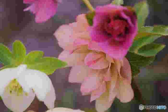 同じ花でも、様々な意味を持つ花もありましたね。記念日などの大切な場面ではもちろん、日常のさりげないプレゼントにも、素敵な花言葉を持つお花を選んで贈ると、相手を大切に思う気持ちが伝わるのではないでしょうか。