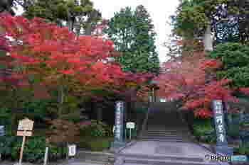 北鎌倉駅の目の前にある円覚寺。臨済宗円覚寺派の大本山であり、鎌倉五山の第二位のお寺です。「五山」とは、禅宗寺院の格式を表す、中国にならった制度です。情緒ある山門の両脇に、鮮やかな2本のもみじが、まるで旅人を歓迎してくれるかのように色づきます。