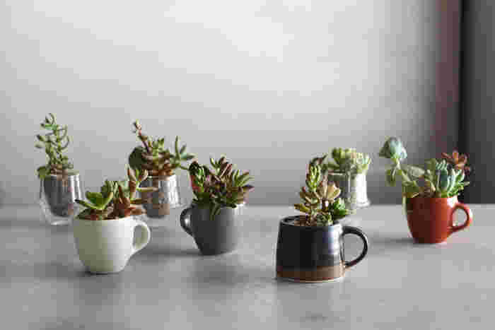 器はどんなものでも可能ですので、選んだ苗に合うものを探してあげて下さいね。こんな風に、お気に入りのマグカップに寄せ植えしてあげても。