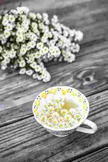 ハーブティーはカフェインを含まないものが多いため、夜のリラックスタイムにぴったり。おすすめは「カモミール」と「リンデン」。お湯だけでなく、ホットミルクと合わせてもまろやかになって美味しいですよ。