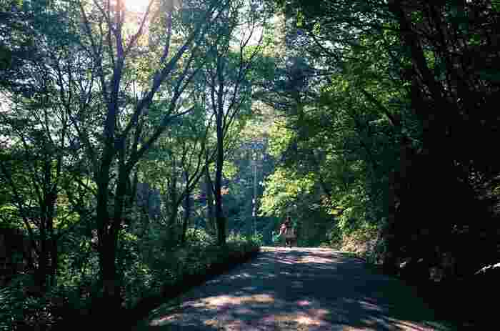金剛生駒紀泉国定公園の一部に属する標高959.2メートルの葛城山は、大阪平野と奈良盆地を隔てる金剛山地の山の一つです。葛城山は比較的なだらかな傾斜地となっているハイキングコースが整備されているため、気軽に森林浴をしながらハイキングを楽しむことができます。