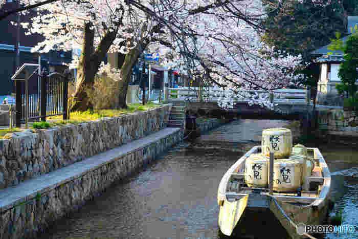 かつて物流の大動脈として活躍していた木屋町を流れる高瀬川沿いには、四条~五条間で約200本のソメイヨシノの桜並木が続いています。復元された高瀬舟の展示された「一之舟入」もおすすめ。 飲食店も多いエリアなので、日中も夜も食事をしてから桜を楽しむことができる人気のお花見スポットです。夕方からはライトアップも行われるので、夜桜を見ながら川沿いを散歩するのも趣きがあって素敵ですよ。