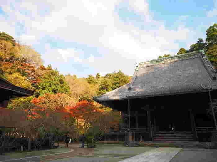 日蓮聖人(祖師)を祀る「祖師堂」。晩秋の終わりかけた紅葉も、静謐な「妙心寺」では、風情がありますね。