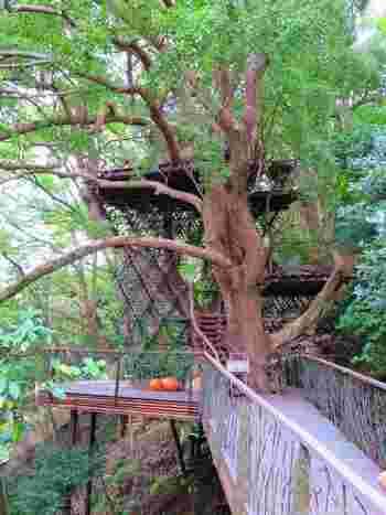 熱海の山上に佇むリゾートホテル「星野リゾート リゾナーレ熱海」内にできた、ツリーハウス「森の空中基地 くすくす」 ツリーハウス自体に宿泊はできませんが、いろいろな体験をすることができます。