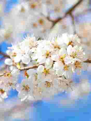 ・空の鏡…月 ・春告げ鳥…うぐいす ・花笑み…人の笑い顔を花の咲くことに例えた言葉 ・風花 ( かざはな ) …冬の青空に舞う純白の雪を花びらに例えて  このように昔の日本人が季節の移ろいの中に、「美」や「楽しみ」を見出していたのだろうな、と想像できる豊かな言葉があります。