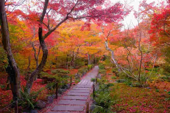 「宝筐院(ほうきょういん)」は、紅葉の名所として良く知られる臨済宗の寺院。風雅な石畳が伸びる庭園は、紅葉の頃になると、燃え立つような美しさです。