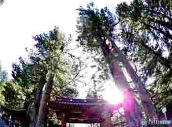 境内には、勝負運が上がると言われている樹齢1100年のいちい(=一位)の木や、縁結びのご利益がある縁結びの笹、夫婦円満のご利益がいただける夫婦杉、警護の武士が度々化け物と間違えたために刀傷がたくさん残っている化灯篭など、みどころがいっぱい。さらに時間があったら、運試しの鳥居で有名な「別宮滝尾神社」にも足を延ばしてみてくださいね。