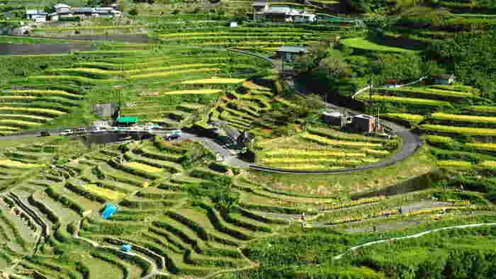 総面積7ヘクタールの傾斜地に約1340枚の棚田が敷かれている丸山千枚田は三重県熊野市に位置する棚田です。