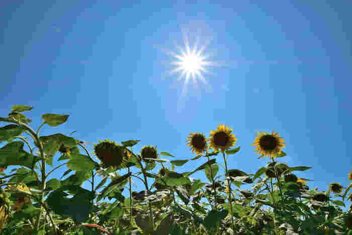「土用」は夏が有名ですが、立春、立夏、立秋、立冬の前の18日間の事です。夏の「土用の入り」が7月20日頃で、立秋の前日の8月6日頃までの18日間が夏の土用です。