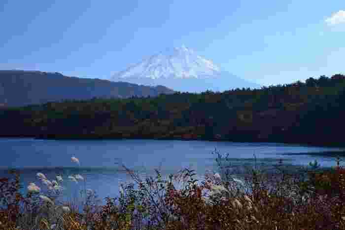 富士五湖の中央に位置する西湖(さいこ)。青樹ヶ原樹海(あおきがはらじゅかい)と連なり、開発の手が及んでいないため豊かで美しい自然が残されています。絶滅種「クニマス」が発見された湖としても有名です。