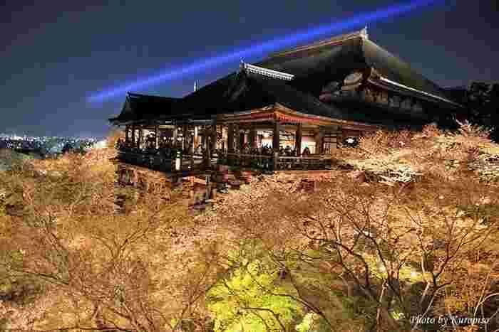 京都の中でも大人気の観光地「清水寺」。さまざまな種類の桜が見られるということもあり、この時期は多くの観光客が訪れます。日中に見る桜はもちろん、夕方からはライトアップもされているので、また違った景色を望むことができるのも人気のポイント。清水の舞台からは市内を一望でき、絶景を楽しむことができるおすすめスポットです。
