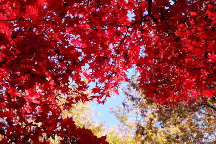 紅葉も楽しめる秋ヶ瀬公園は都内からも近いさいたま市にあり、900台以上停められる無料駐車場があるのも嬉しい大きな公園です。電車では最寄り駅から約30分は歩くため、車で行くのがおすすめです。
