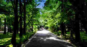 地面だけでなく木々まで苔に覆われた庭園は神秘的な雰囲気です。