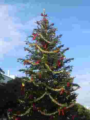 高さ10mもある本物のモミの木が、シンボルです。ドイツの職人が手作りした小さな木製の回転木馬にも乗れますよ。スノードーム制作教室やイベントステージで、クリスマス気分も盛り上がります♪