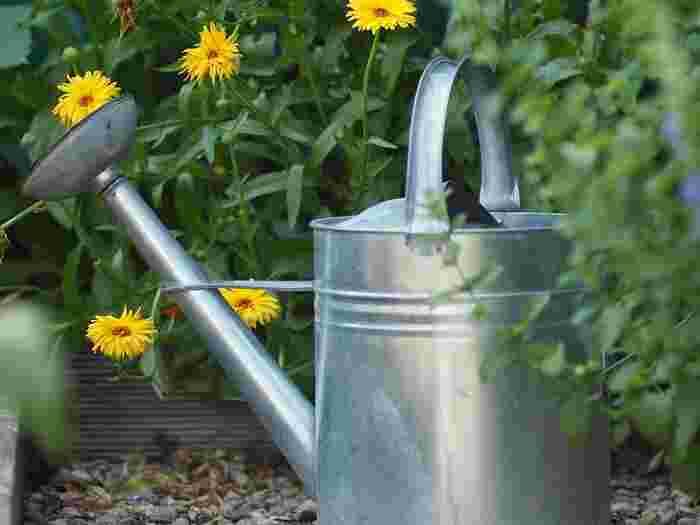 また、秋の初めはまだ暑いので夏と同じでOKですが、夜は冷えてくるため夕方の水やりを減らしていきます。また、冬の水やりは必要最低限に。ちなみに水やりのあと、受け皿に水をためておかないことも根腐れ防止の大切なポイントです。