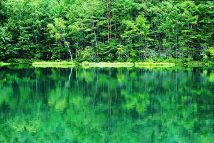 日本画家の東山魁夷の作品「緑響く」のモチーフとして知られる「御射鹿池(みしゃかいけ)」は、美しい緑の湖面に涼を感じる場所です。2010年には農林水産省の「ため池百選」に選定され、海外からも多くの方が訪れる人気スポットとなっています。