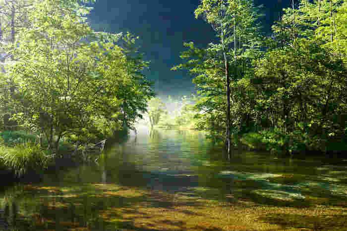 田代池は時間帯によって刻一刻と表情を変えてゆきます。樹々の間から差し込む木漏れ日が、田代池の神々しい姿を一層と引き立てています。