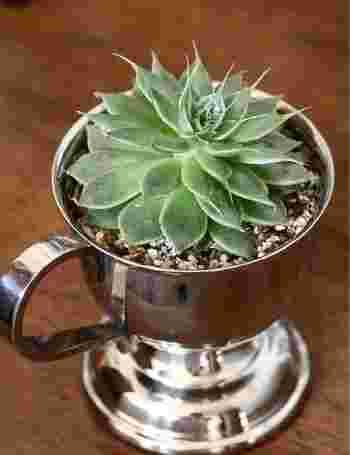 昔の、ステンレス製のアイスカップを鉢に。キラっと輝いてかっこいいアクセントになりそう。