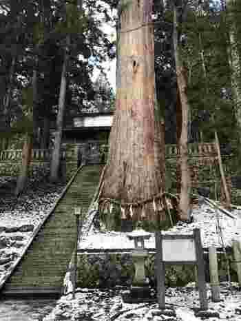 また細野諏訪神社では大きな大きな杉の木に出会えます!治承元(1177年)に、八田弥五兵衛という人が献木したという言い伝えのある、白馬のパワースポットです。