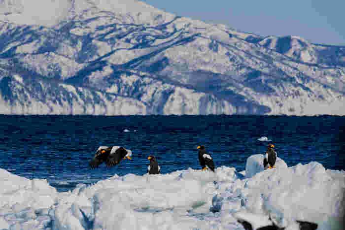 オホーツク海に接する知床半島の西岸に位置する温泉街。その魅力は何といってもオホーツク海ならでは景色と、そこで生きる動物たちの姿。厳しくも美しい自然を目の当たりにすると、感動せずにはいられません。  ♨ 泉質:塩化物泉、茶褐色または淡黄緑色、弱アルカリ性 ♨ 適応症:神経痛、筋肉痛 (美肌効果)