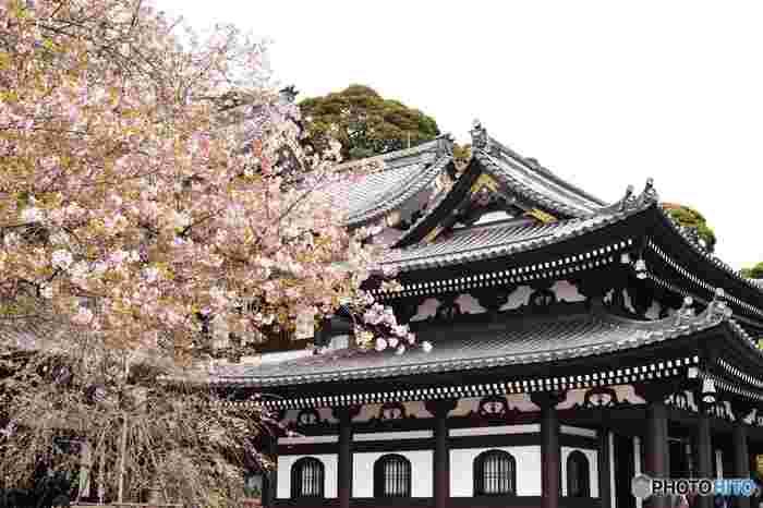 桜の季節はご覧の通り。本堂とのコラボレーションが写真映えします。