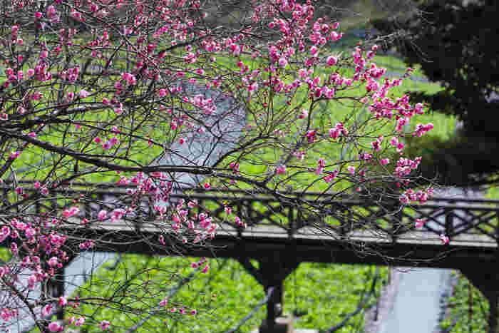 日本で最大のわさび園「大王わさび農場」。清流ですくすくと育つワサビ田など見どころは多く、園内はかなり広いので、歩きやすい靴で出かけましょう。
