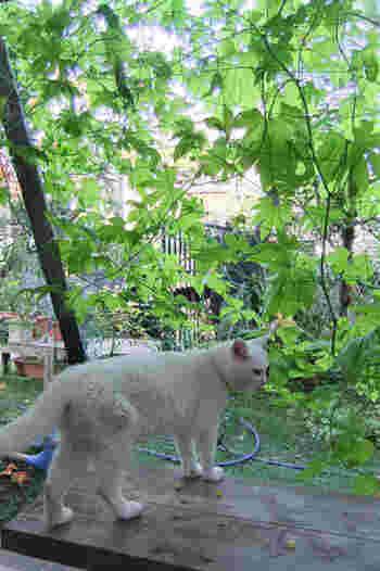 グリーンカーテンは、夏の暑さをエコにしのぐ、自然の力を活かした暮らしの知恵。さぁ、今夏は育てて食べて、涼んで楽しい、グリーンカーテンをはじめてみませんか?