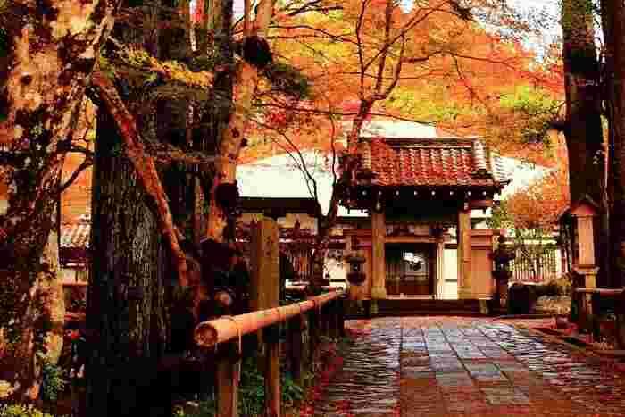 1356年の創建と古くからの歴史があり、豊かな自然に囲まれた静かなお寺です。紅葉と調和した風雅な佇まいや、道々にちりばめられた「五百羅漢」と呼ばれるお釈迦様の弟子500人をあつめた仏像の喜怒哀楽豊かな表情に心打たれます。